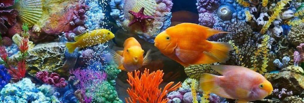 Aquastar lamps for aquariums