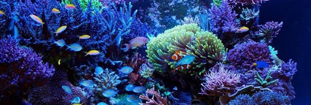 Lámparas Coralstar para acuarios marinos