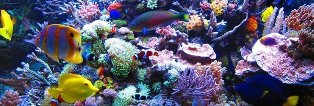 Marinestar lamps for marine aquariums