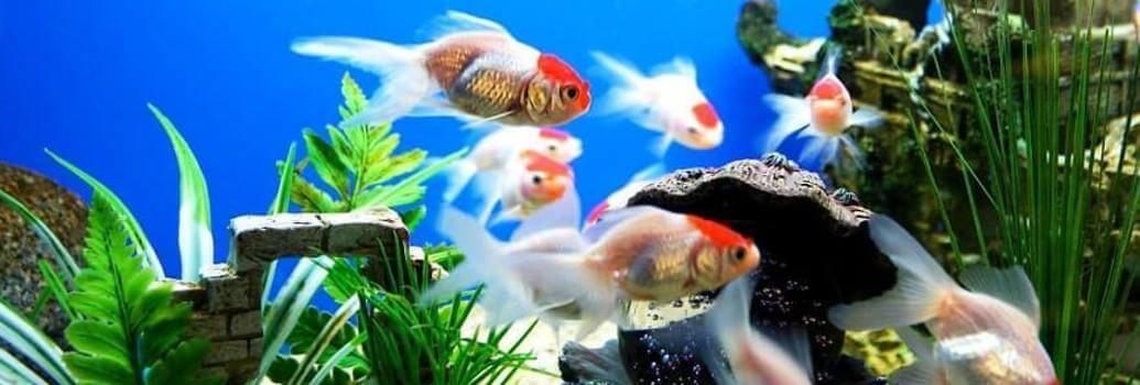 Daylightstar sijalke za akvarije