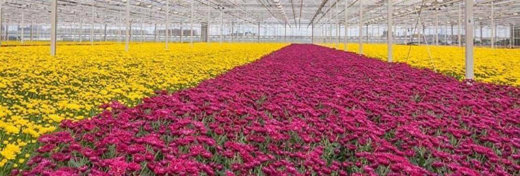 Lámpara y componentes para el cultivo profesional de plantas