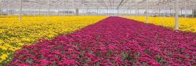 KIT kompleti za profesionalno gojenje rastlin